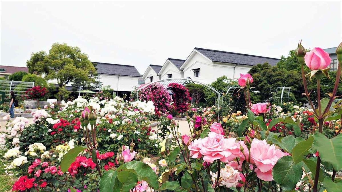 f:id:kyotoside_writer:20210416161918j:plain