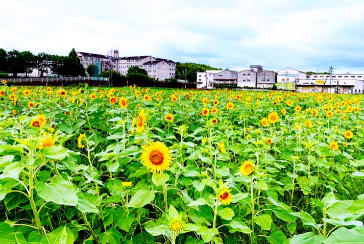 f:id:kyotoside_writer:20210708104403j:plain