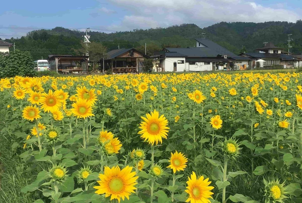 f:id:kyotoside_writer:20210708132048j:plain
