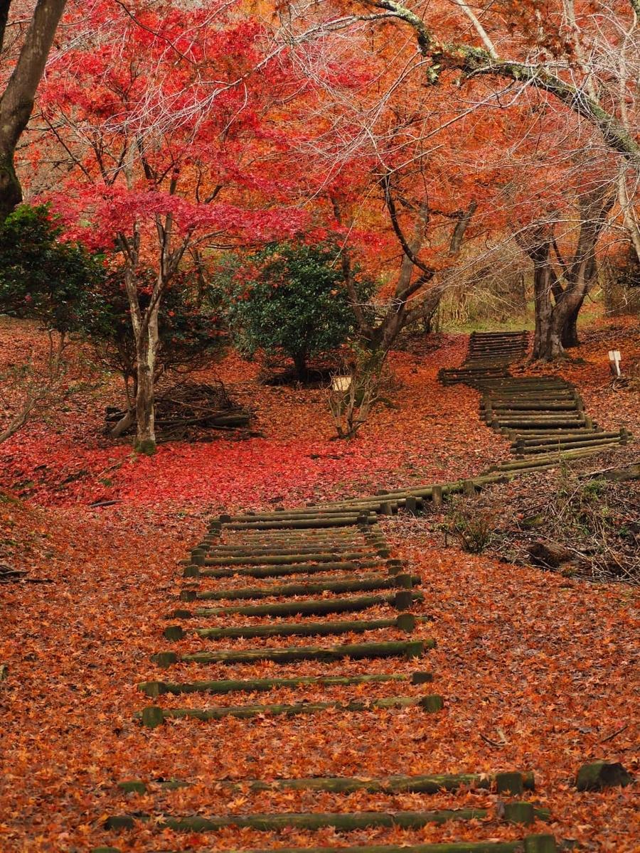 f:id:kyotoside_writer:20211005143030j:plain