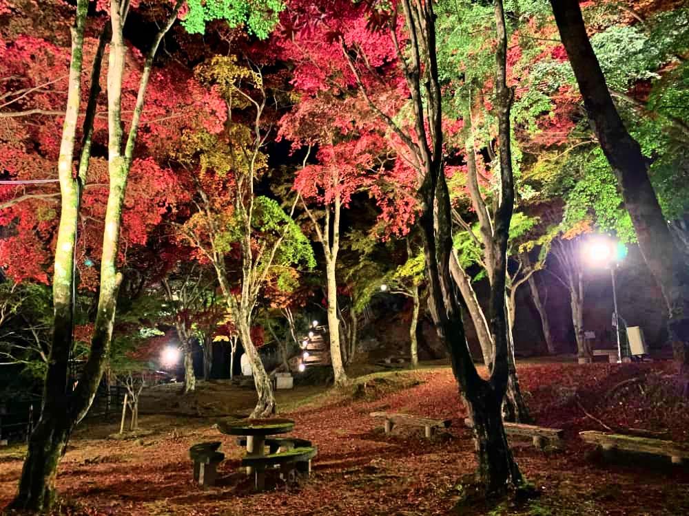 f:id:kyotoside_writer:20211006111327j:plain