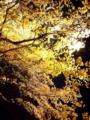 『京都新聞写真コンテスト 照明で映える夜桜』