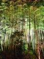 『京都新聞写真コンテスト 竹林』