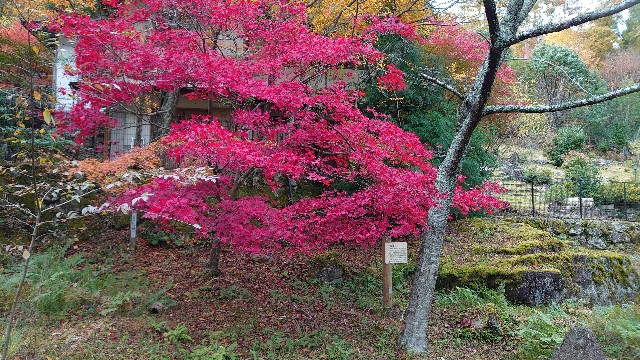 f:id:kyotoyaoyoshi:20191128152057j:image