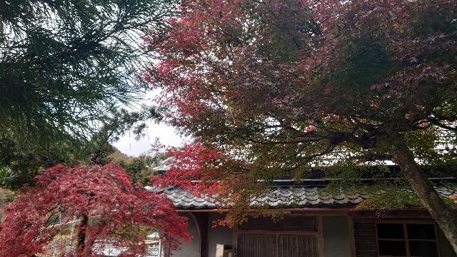 f:id:kyotoyaoyoshi:20191128152111j:image