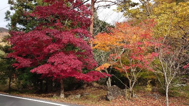 f:id:kyotoyaoyoshi:20191128152121j:image