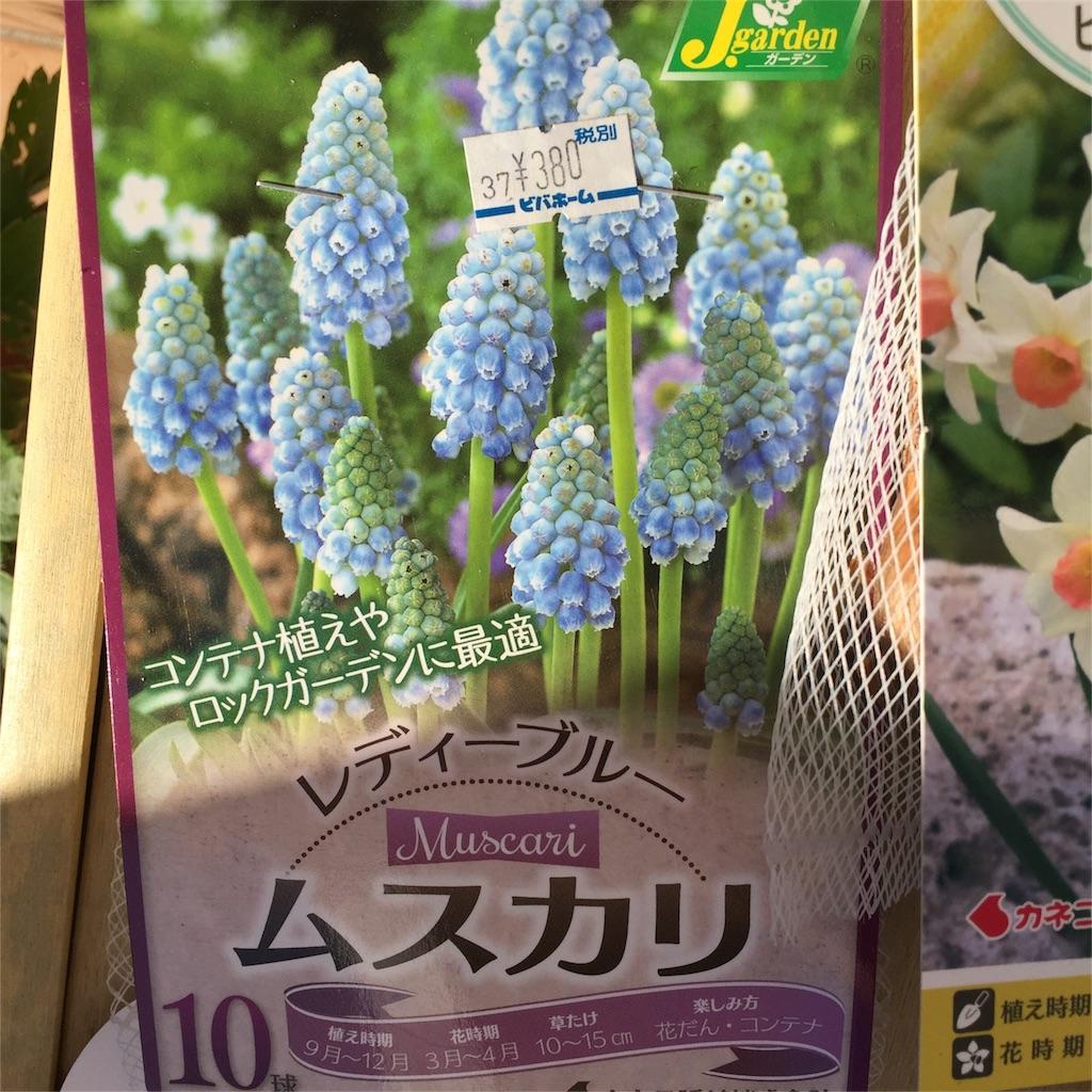 f:id:kyou-mo-iihi:20161018100649j:image