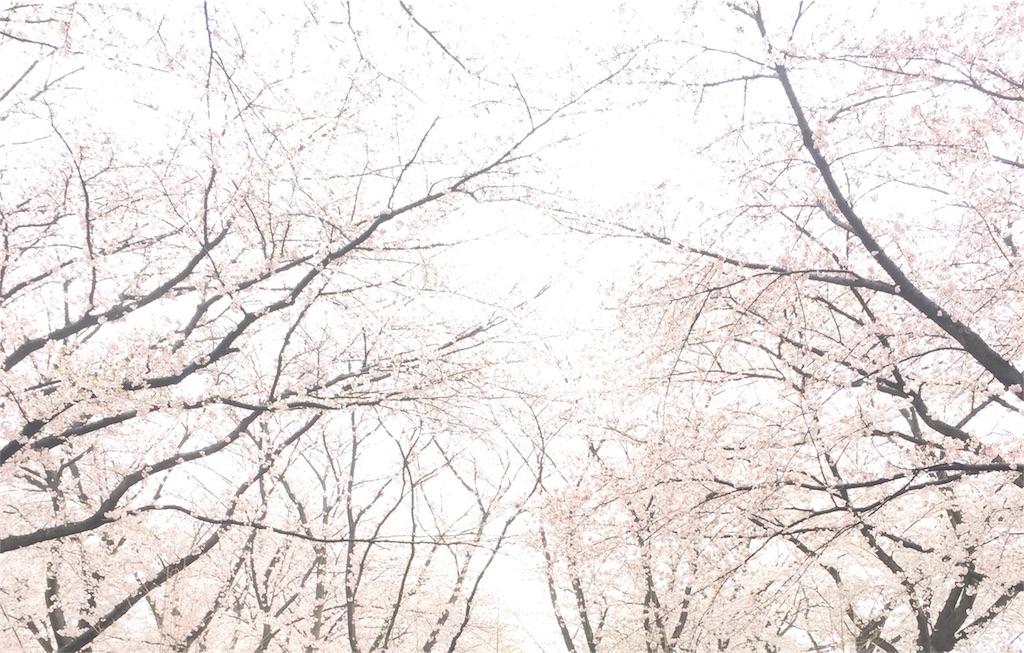 f:id:kyou-mo-iihi:20170410101322j:image