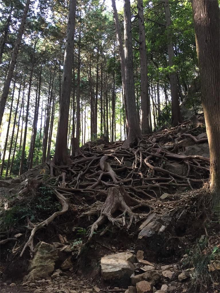 f:id:kyou-mo-iihi:20171118171202j:image