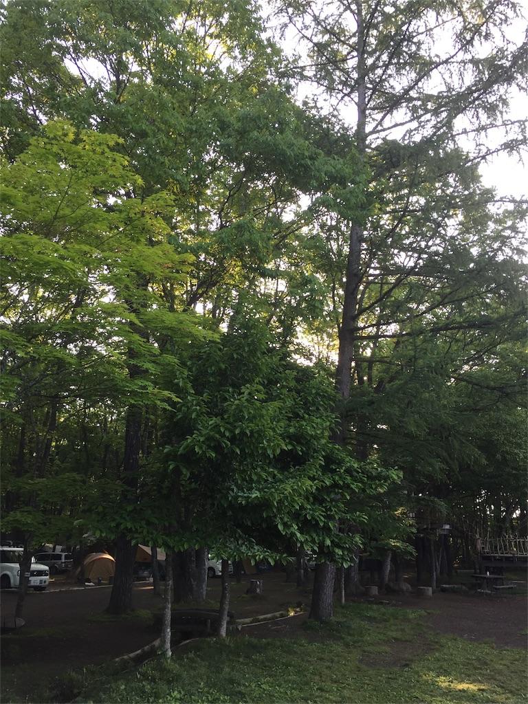 f:id:kyou-mo-iihi:20180616063504j:image