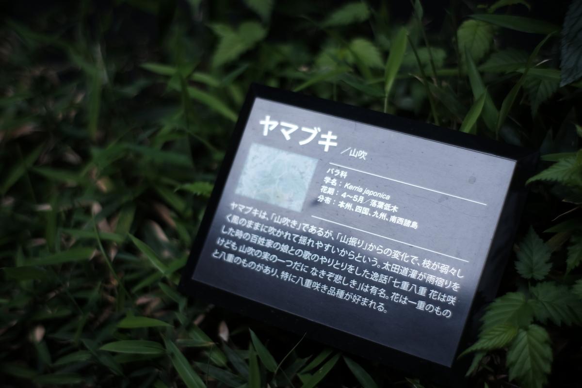 f:id:kyou33235:20210412182204j:plain