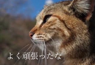 f:id:kyouichi1001:20180709122149j:plain