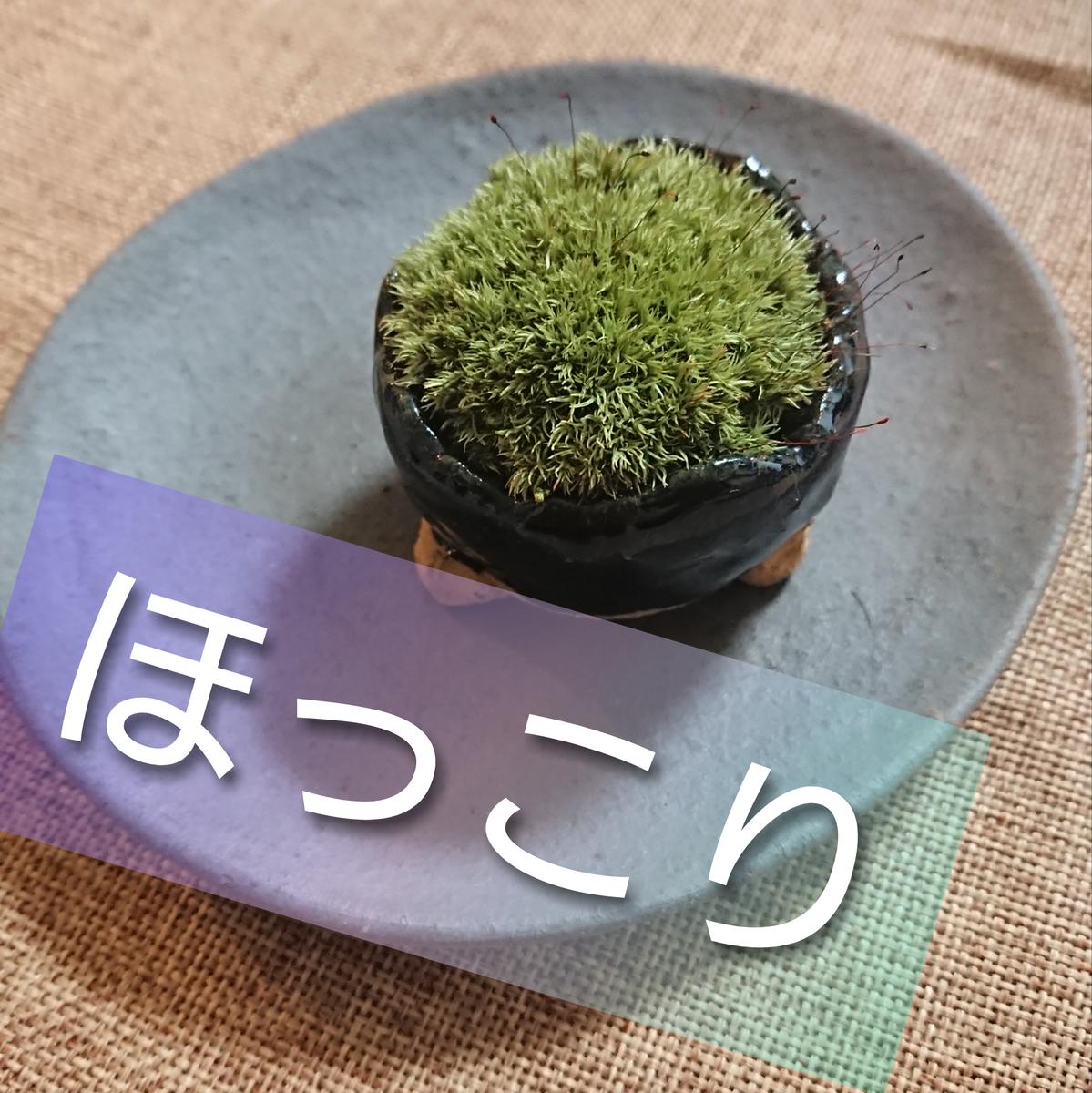 f:id:kyoukirei:20200119205303j:plain