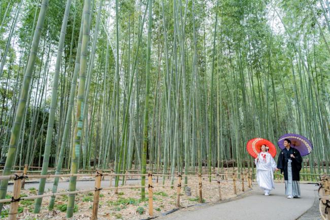 冬でも竹は鮮やかな緑に!