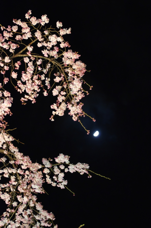 f:id:kyoya_izumi:20120331203020j:image