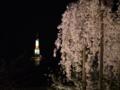 『京都新聞写真コンテスト 京都タワーと桜』