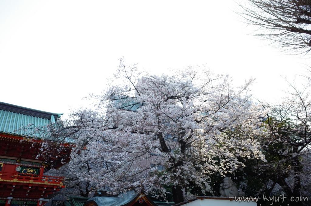 f:id:kyu_com:20170413082700j:plain