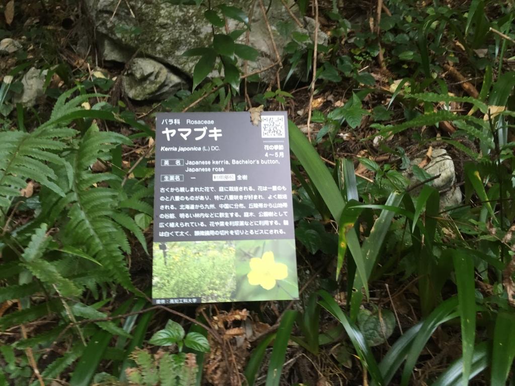 f:id:kyuma-morita:20161105174034j:plain