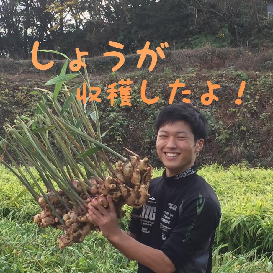 f:id:kyuma-morita:20161126211125j:plain