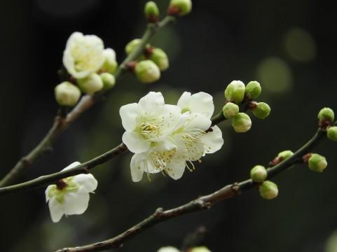 f:id:kz-fujiwara2:20180214194709j:plain