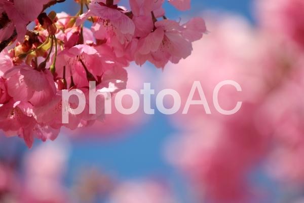 f:id:kz-photo:20200328110221p:plain