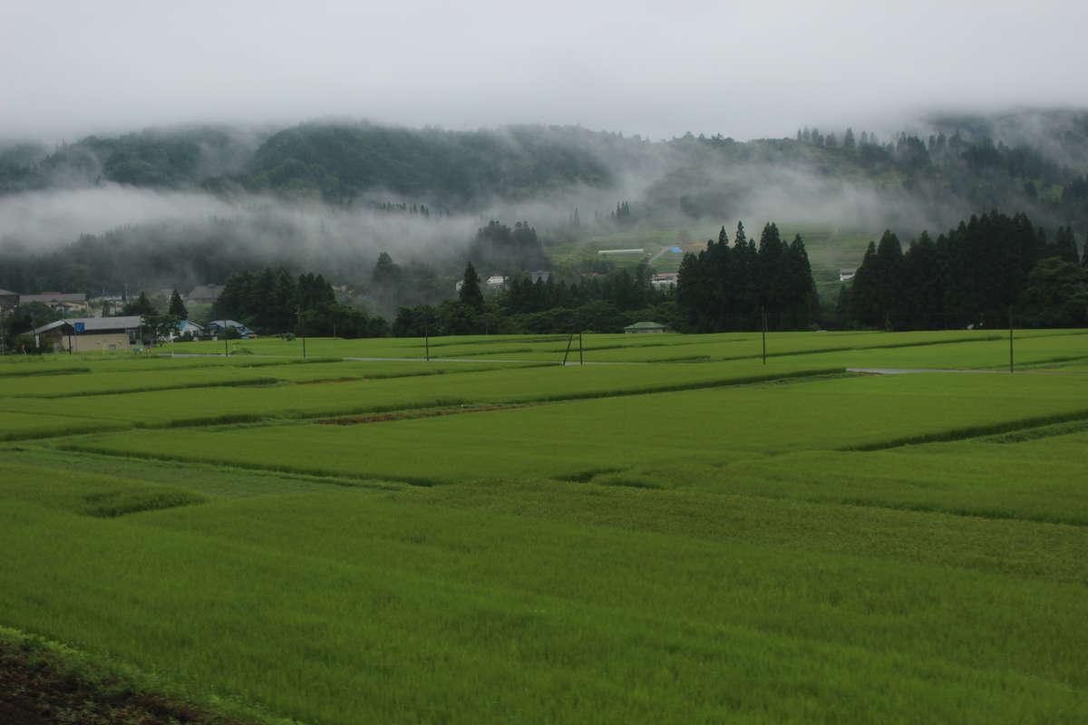 朝霧に煙る里山の風景
