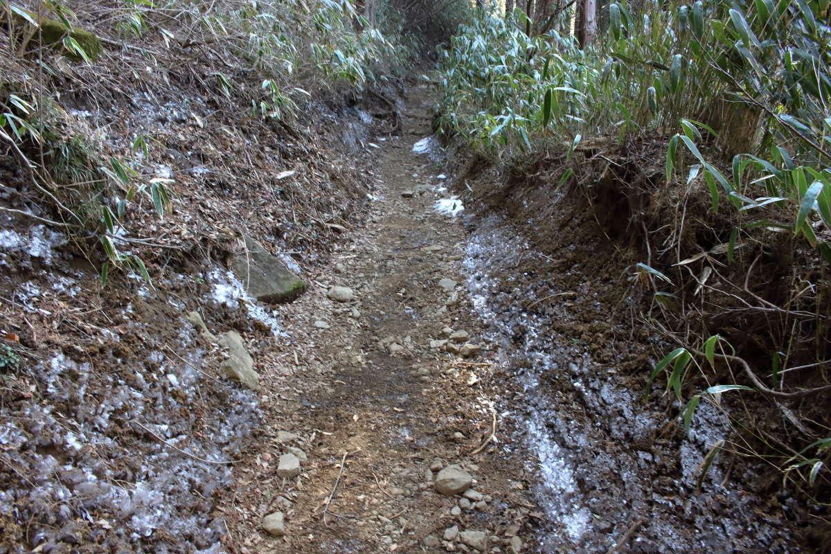 登山道に入ると雪はありませんでした