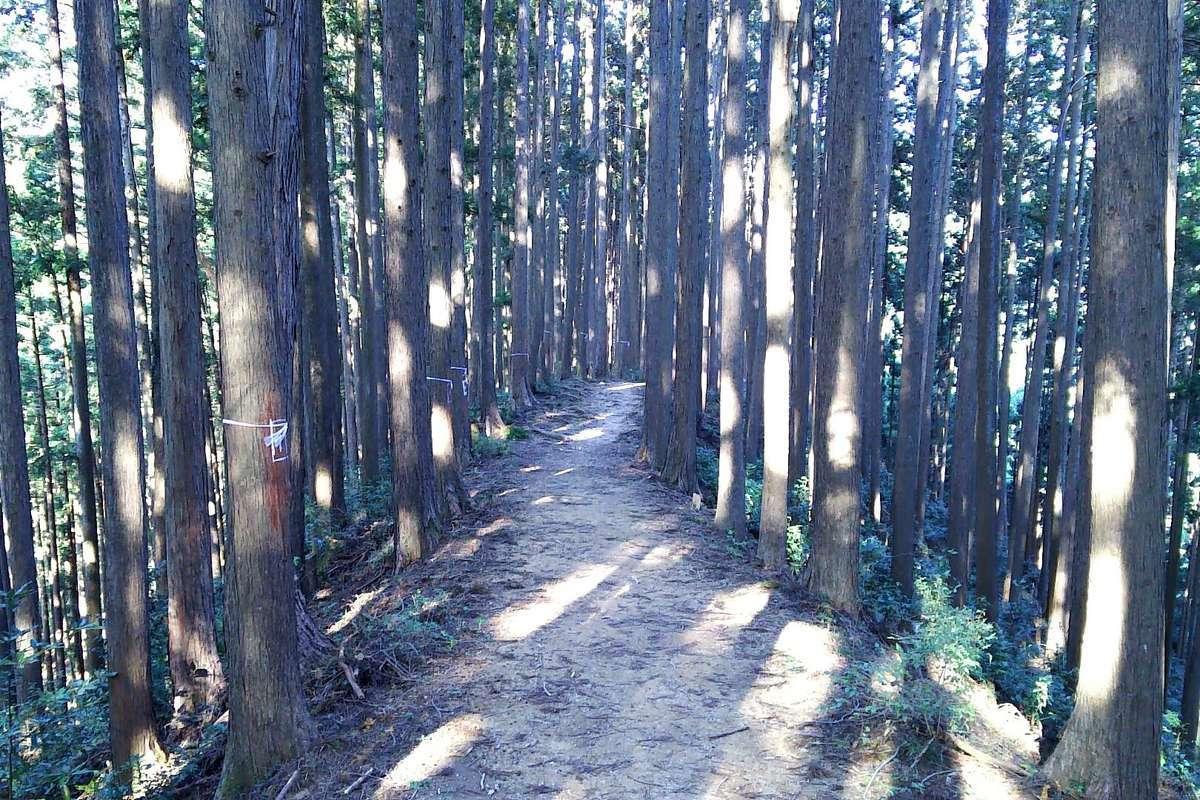 平坦で歩きやすい登山道が続きます