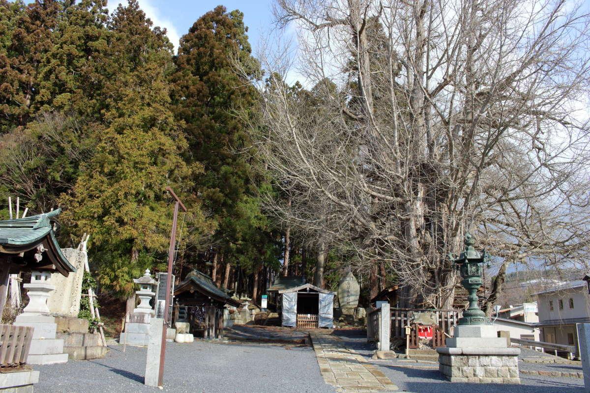 熊野大社にあるイチョウの大木、山形県の天然記念物