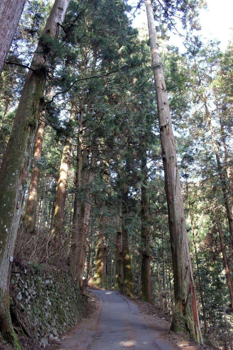 杉並木に囲まれた御岳山の参道
