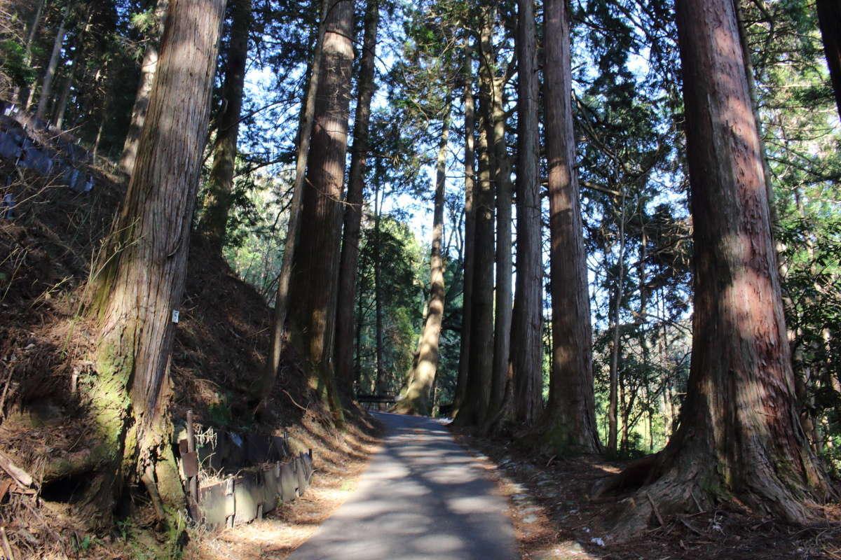 どこまでも続く杉並木