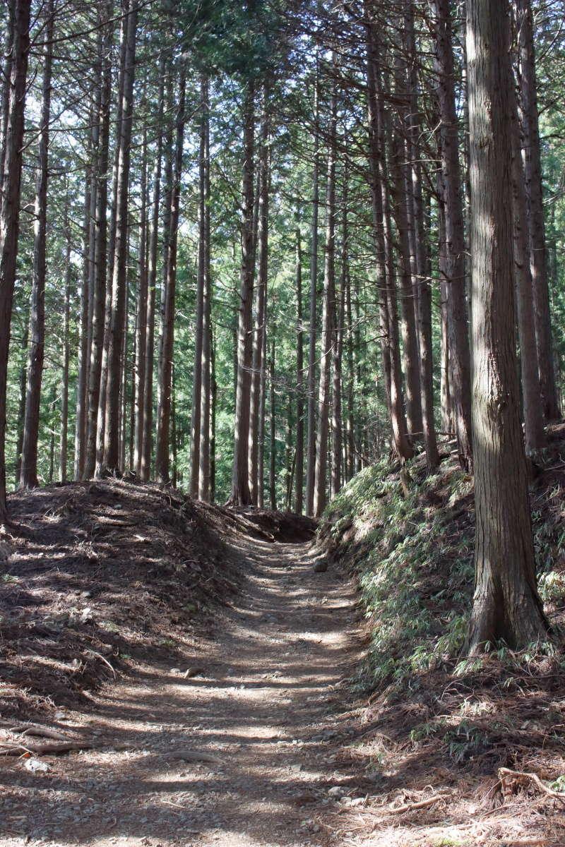 日の出山への登山道は平坦な歩きやすい道
