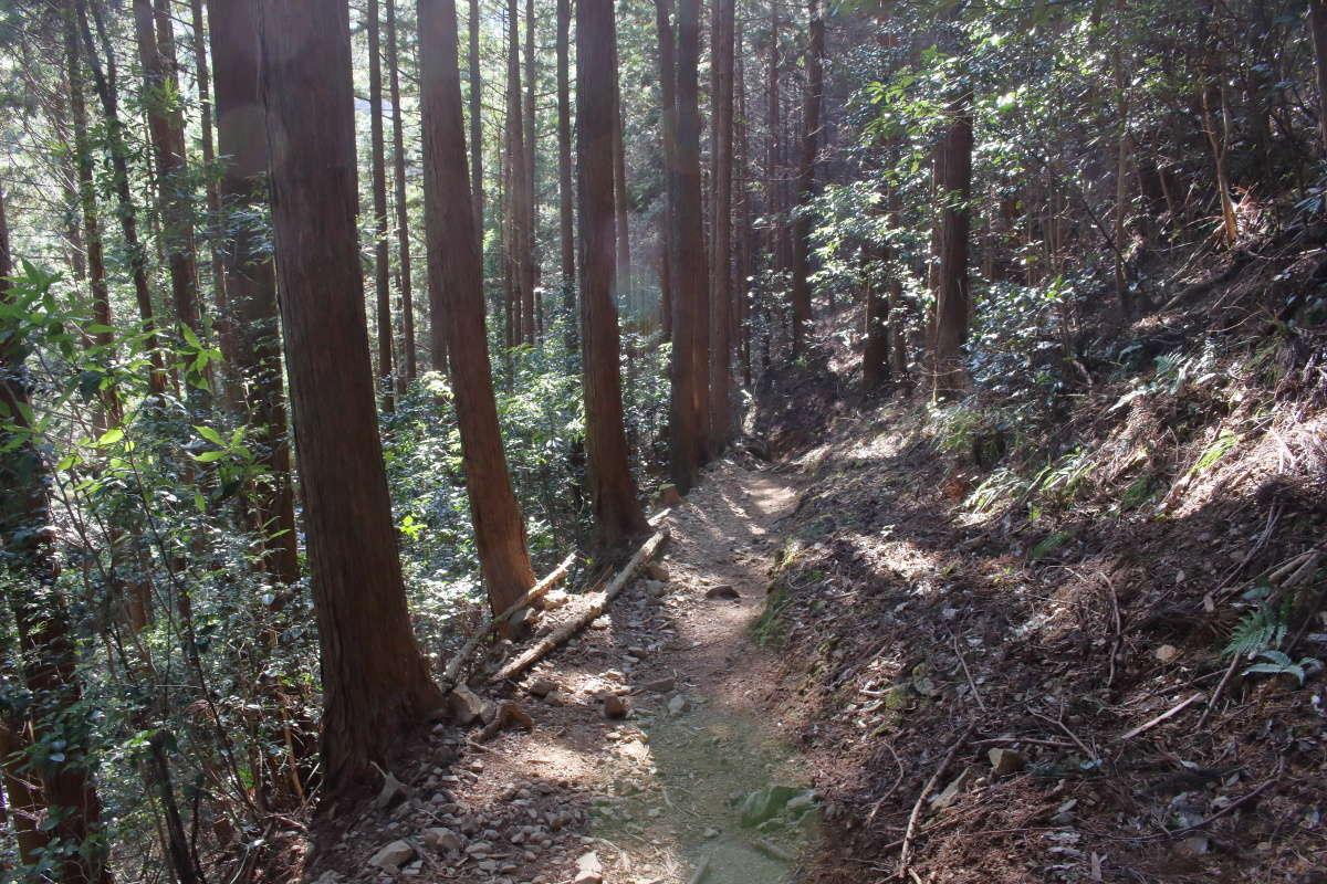 木々に覆われた登山道、危険なところはなく歩きやすい道です