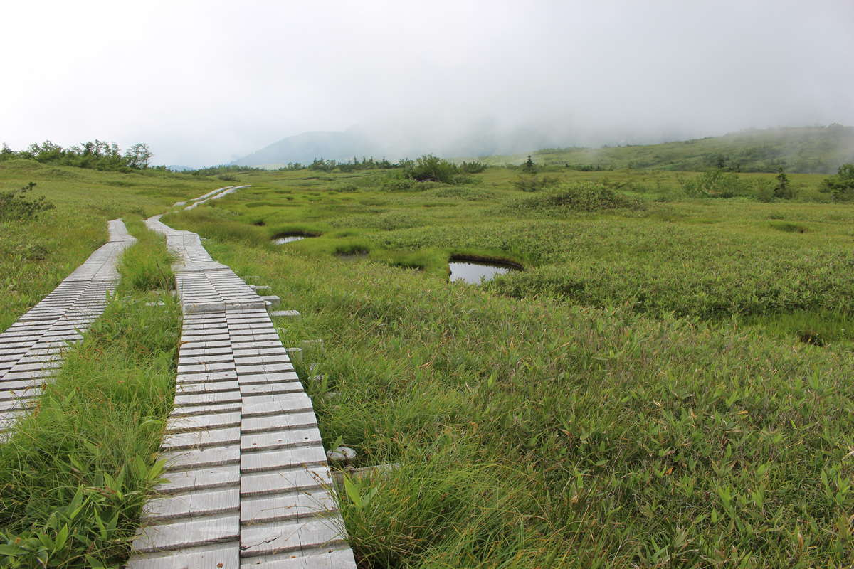 弥陀ヶ原は木道が整備されていて気軽に散策できます