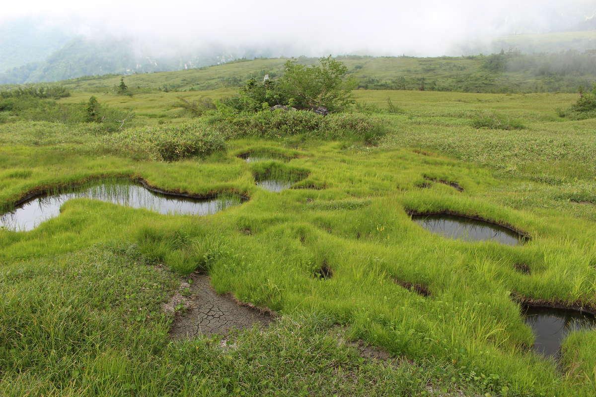 弥陀ヶ原のあちこちに小さな池「池塘(ちとう)」があります