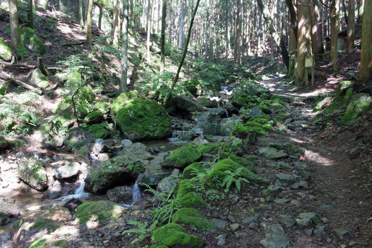 正丸峠までは苔むした沢沿いの登山道を登ります