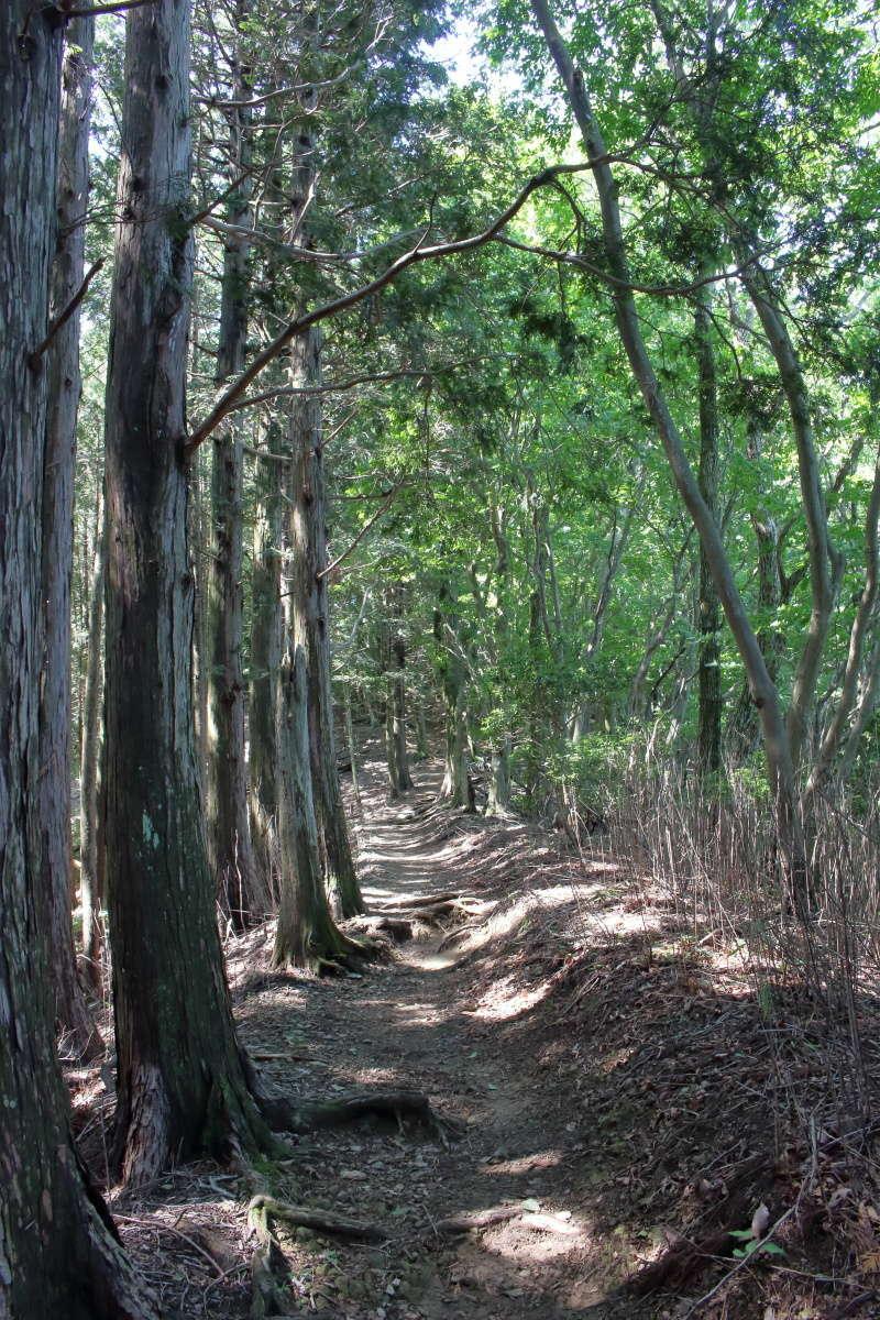 正丸峠から先は快適な樹林帯の登山道へ