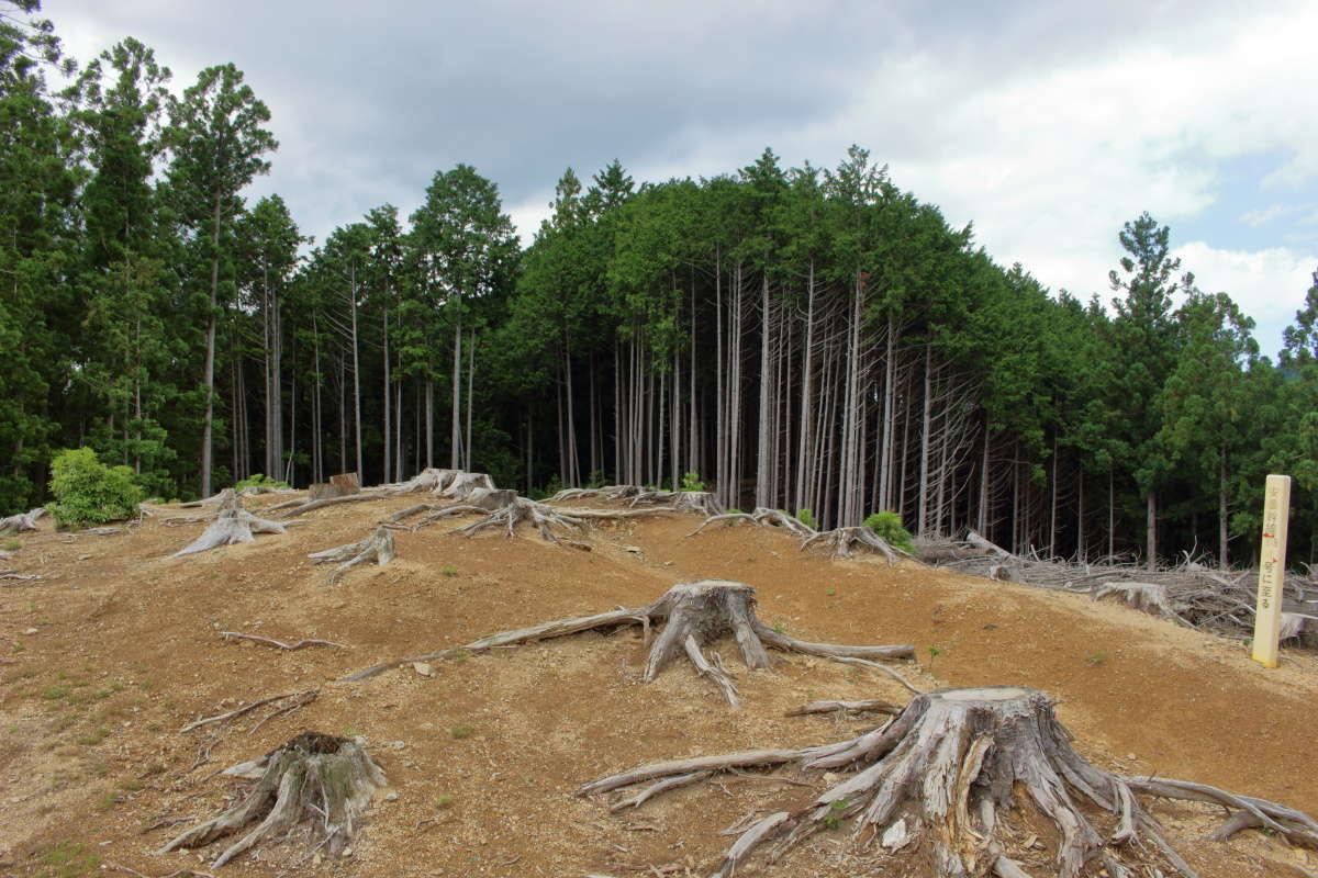木々が伐採されて開けた場所