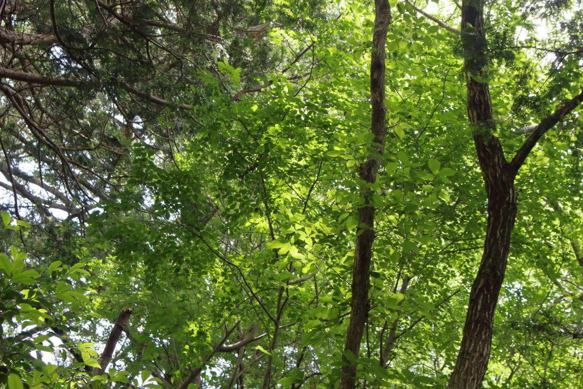 深緑が爽やかな尾根道のハイキング