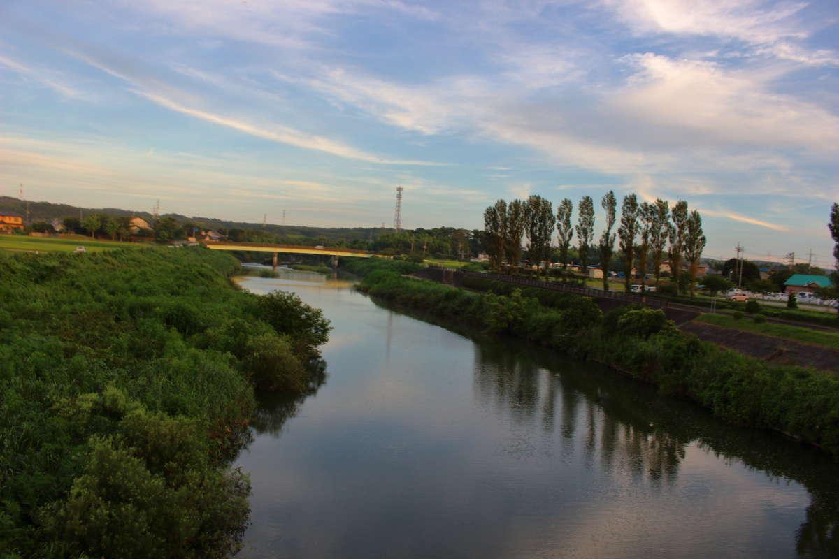 ポプラの木が並ぶ養老川を渡ります