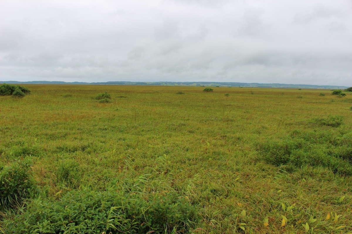 展望台からサロベツ湿原を一望、湿原は秋色へ