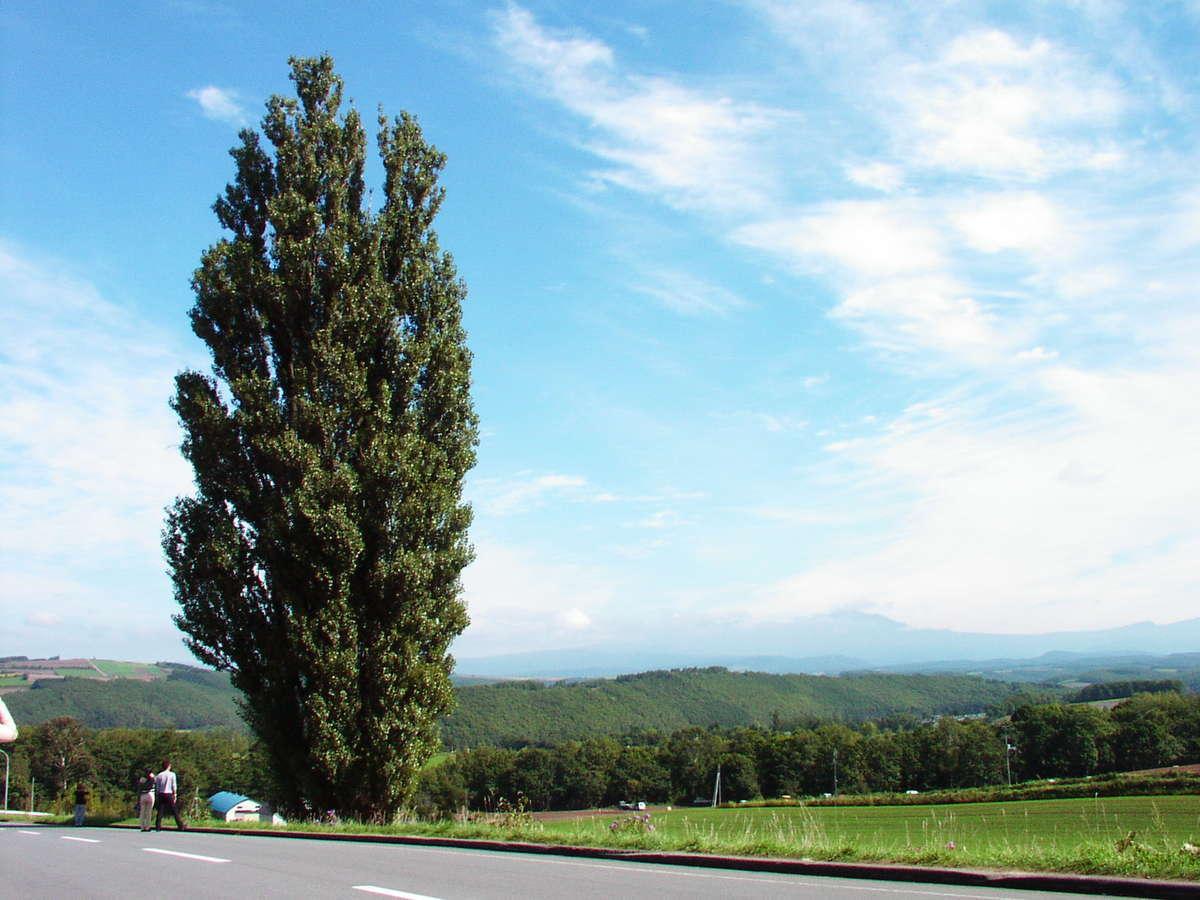 2005年9月下旬に訪れた時の「ケンとメリーの木」