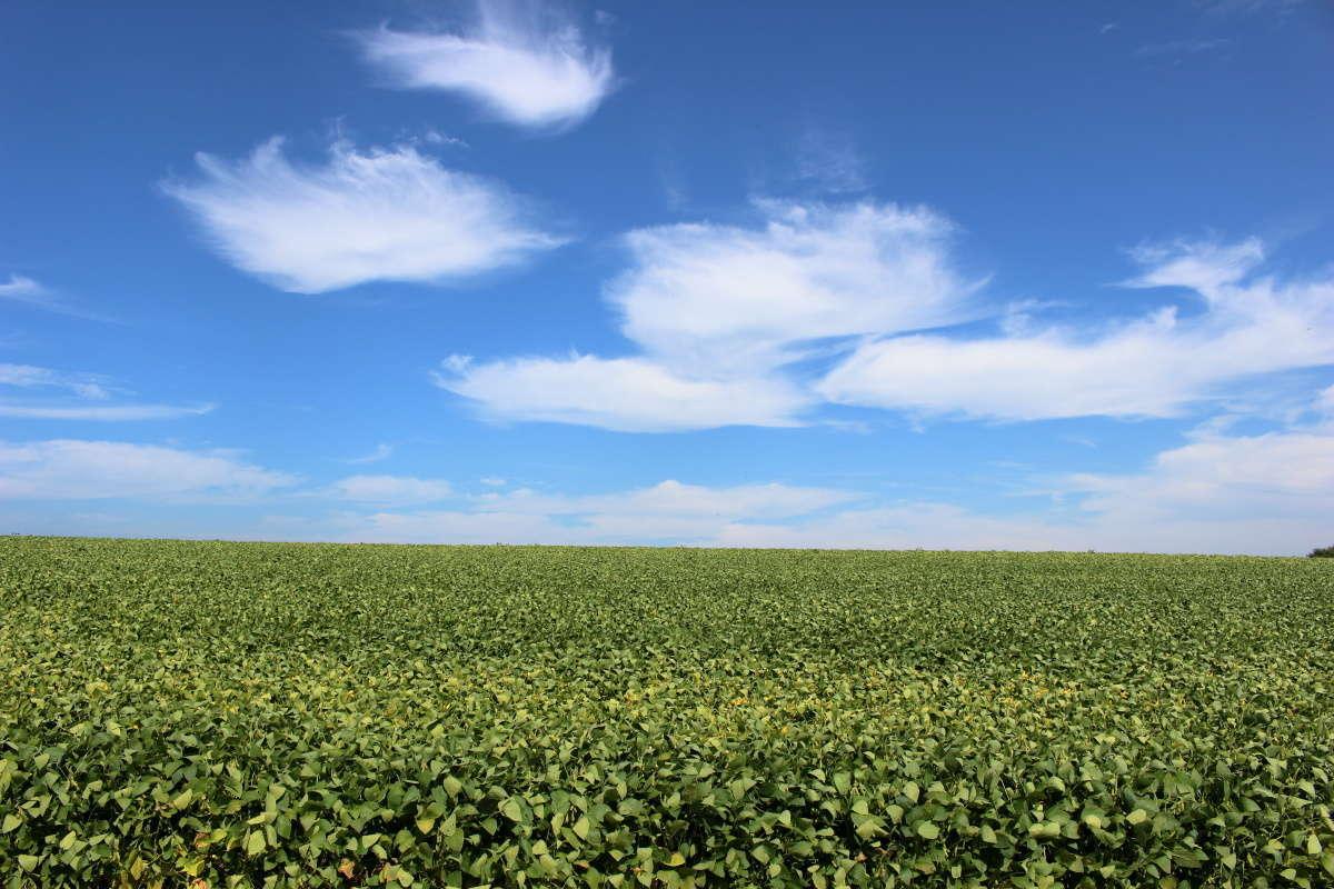 空まで続いていきそうな丘の風景