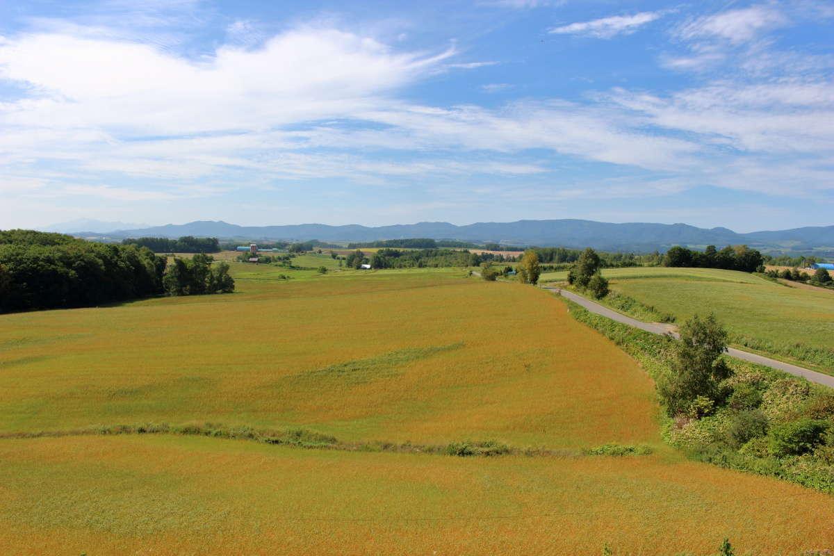 「北西の丘展望公園」の展望台から美瑛の丘を一望!