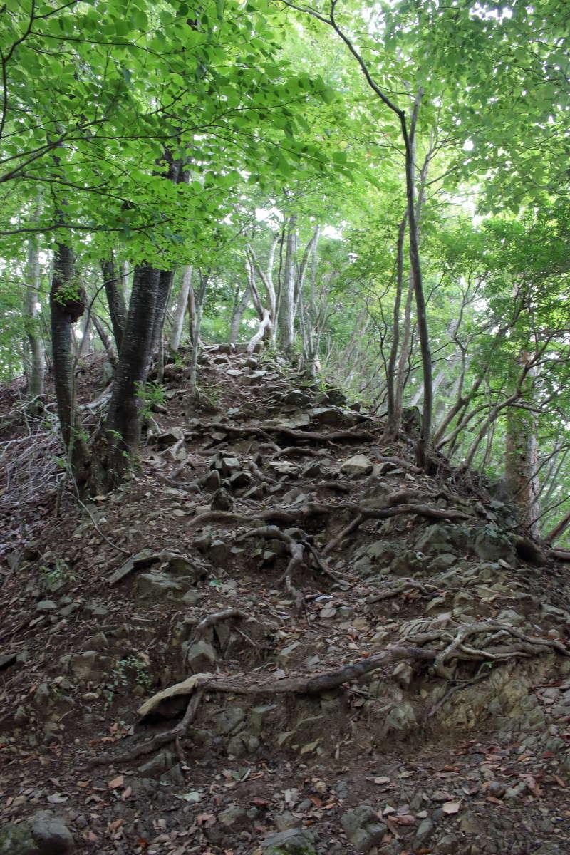 本格的な登山道に入るといきなりの急登!