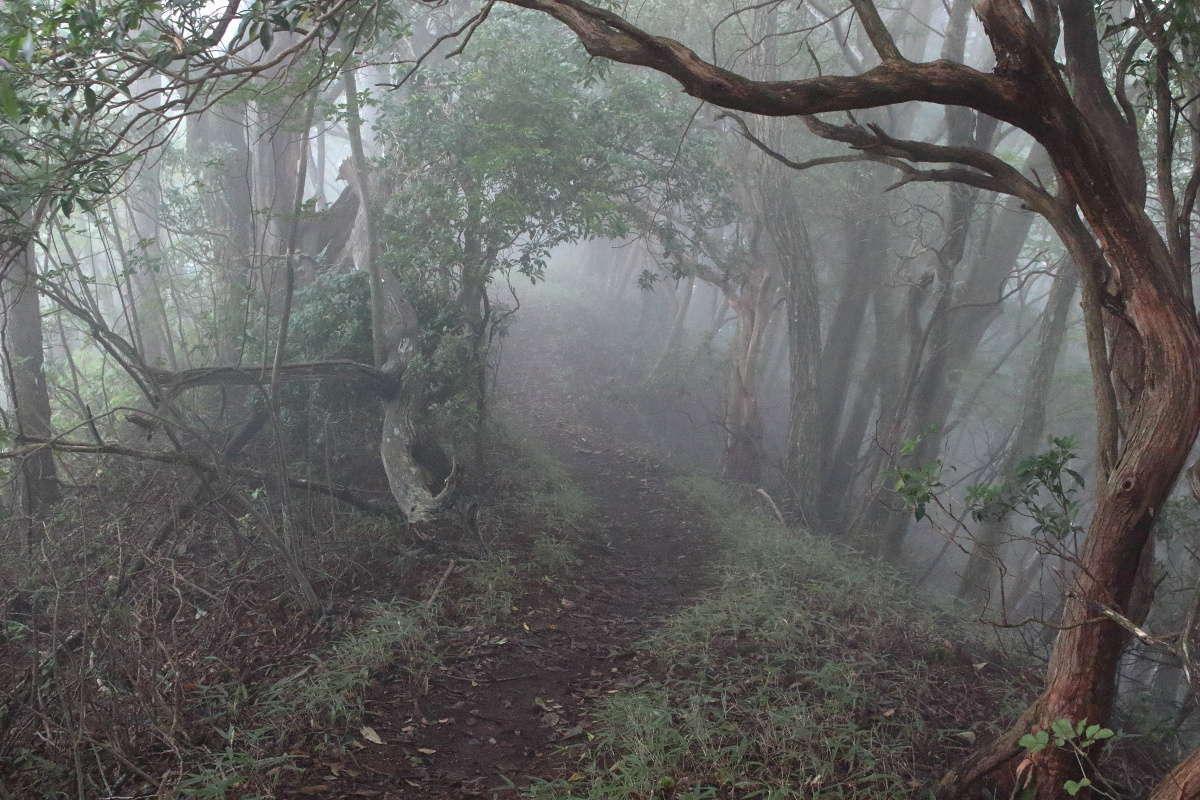 霧の中に迷い込んでいくような登山道を進みます