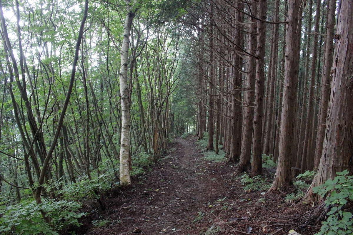 ひたすら樹林帯の道を歩きます