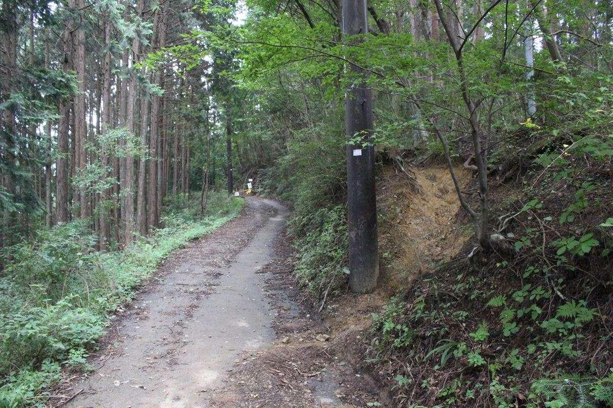 ひたすら長い登山道が終わり林道へ