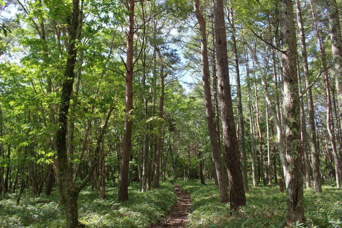 広葉樹の明るい森が気持ち良い!
