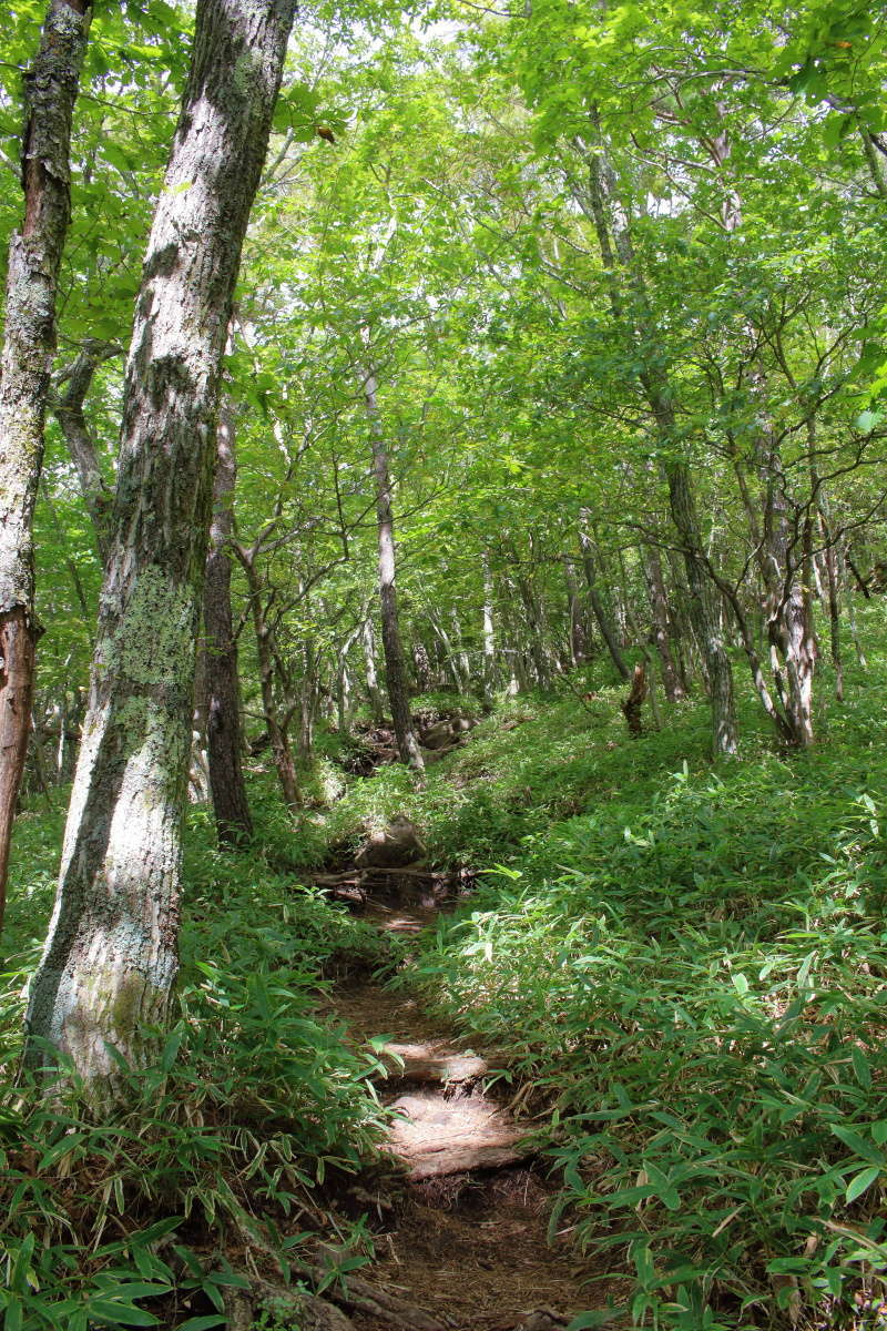 爽やかな森の中を少しずつ登っていきます